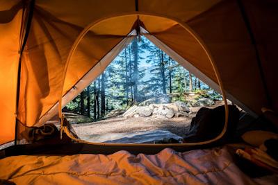 Der Blick aus dem Zelt in den Wald